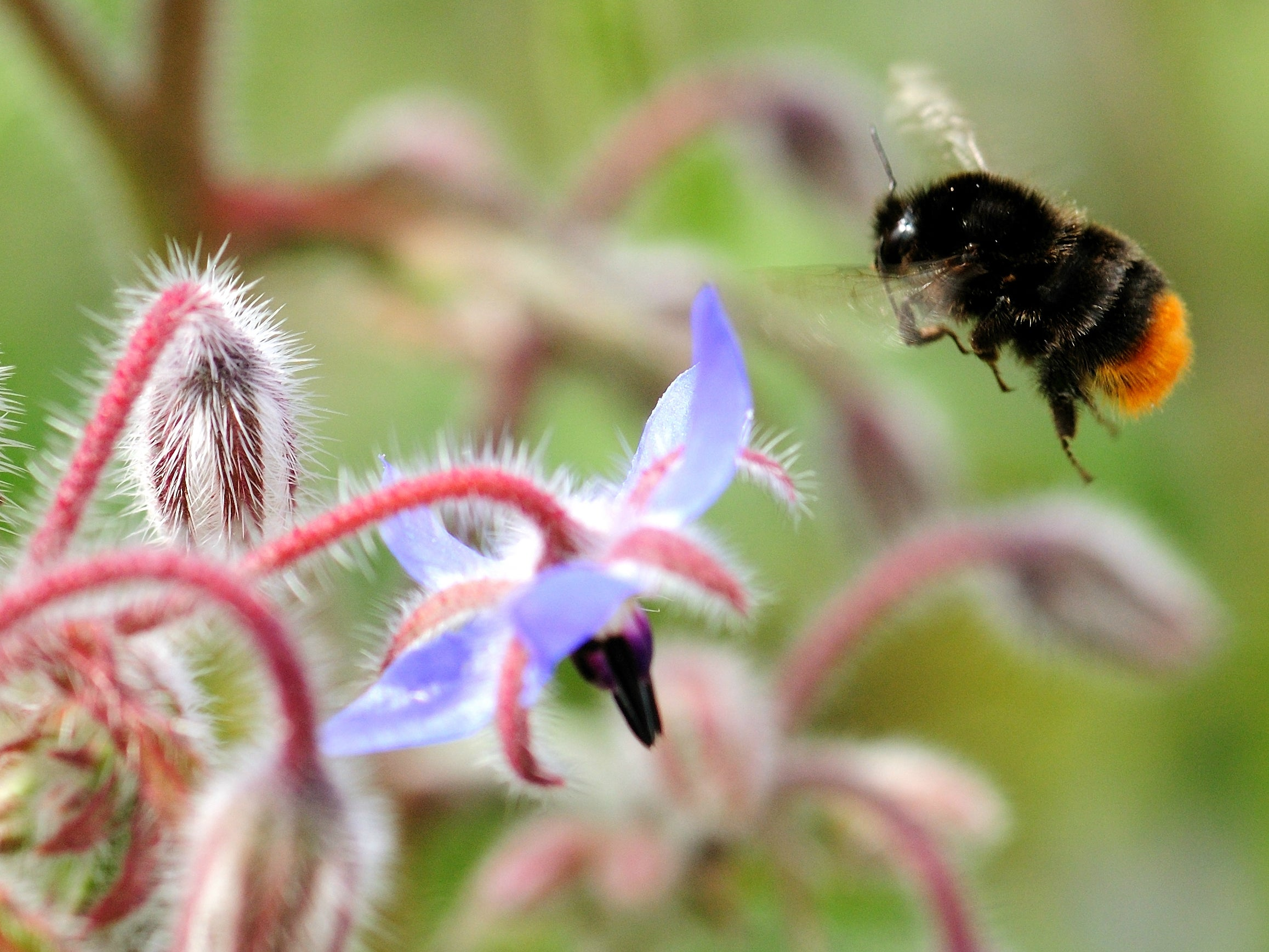 You really can help save bees by planting wildflowers
