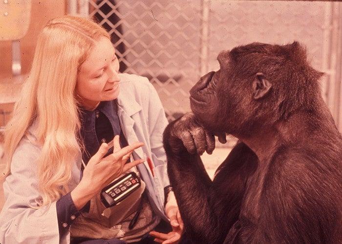Koko and Penny