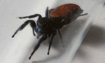 Spider Astronaut Dies On Display At Smithsonian