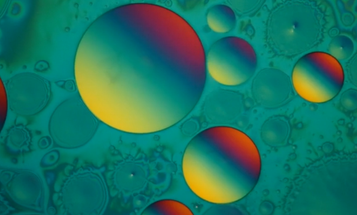 See The Microscopic World In Motion
