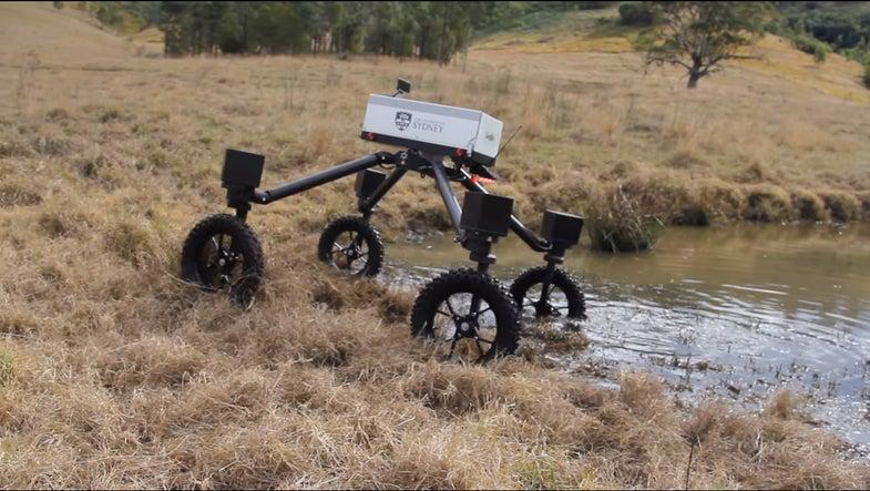 Australia's SwagBot is A Robot Shepherd
