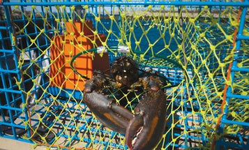 2012 Invention Awards: A Better Lobster Trap