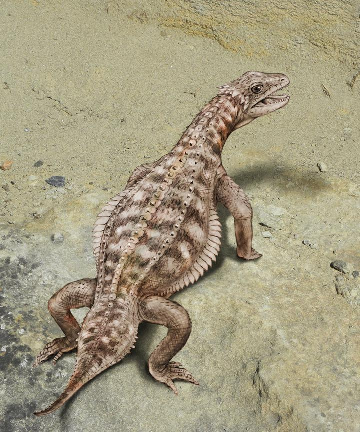 Paleontologists finally know what this ancient armored reptile looked like