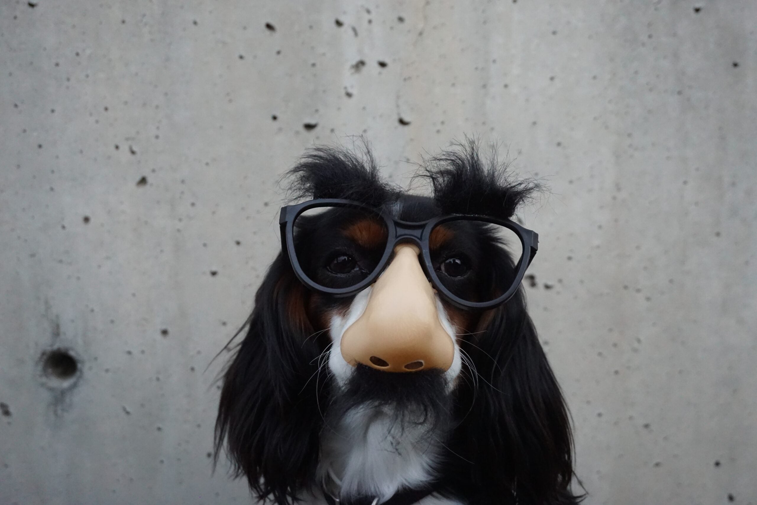 To find drugs and explosives, scientists take cues from dog noses