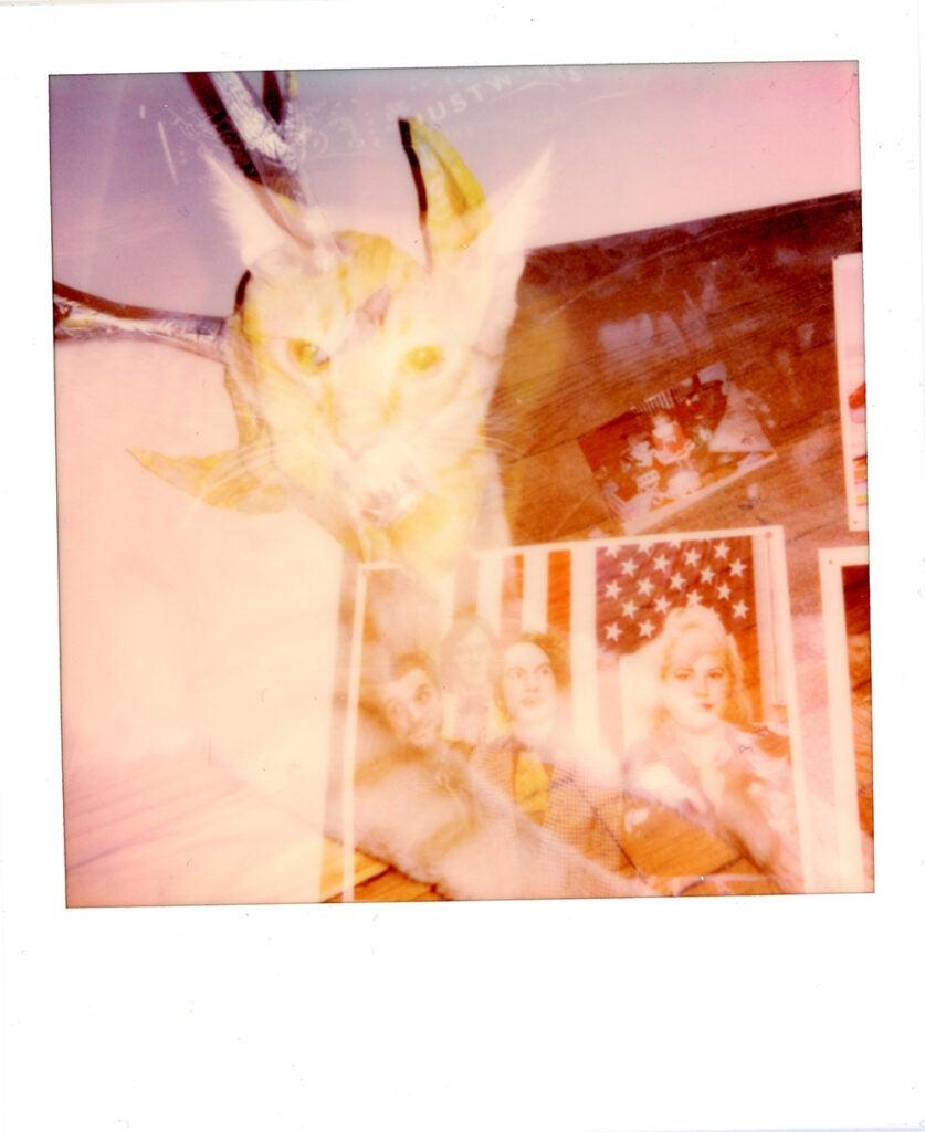 Polaroid Onestep+ sample cat