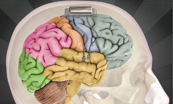 A Harvard Neuroscience Scheme To Change Decisions In Your Brain