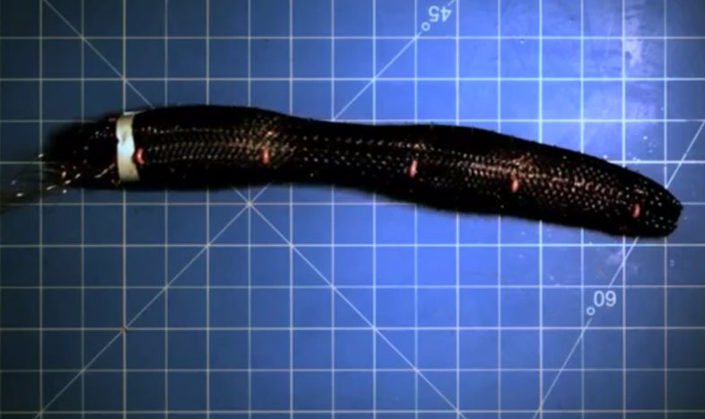 Video: Indestructible Military Inchworm-Bot Survives Attack By Bootheels and Hammers