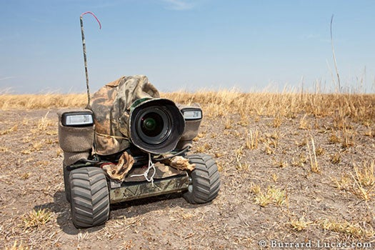 BeetleCam Brings You Close to Wild Animals, Without the Mauling