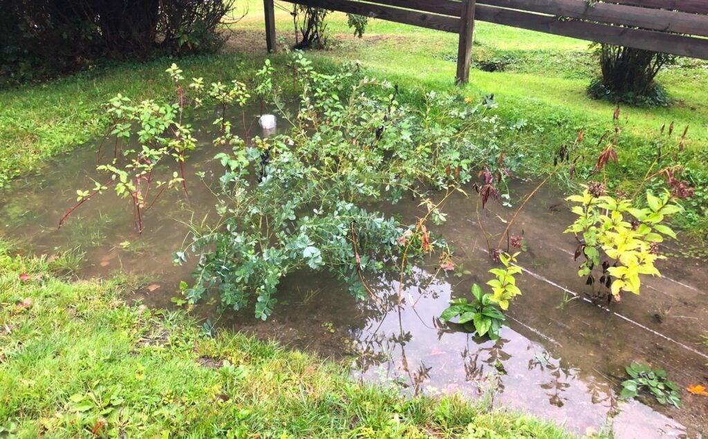 a rain garden situated in a suburban home