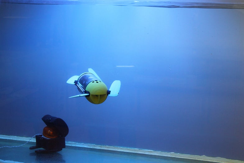 This Adorable Turtle Bot Will Help Underwater Archeologists