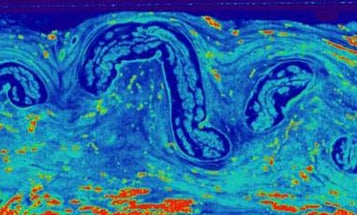 Why can whale nerves stretch and turn like bungee cords?