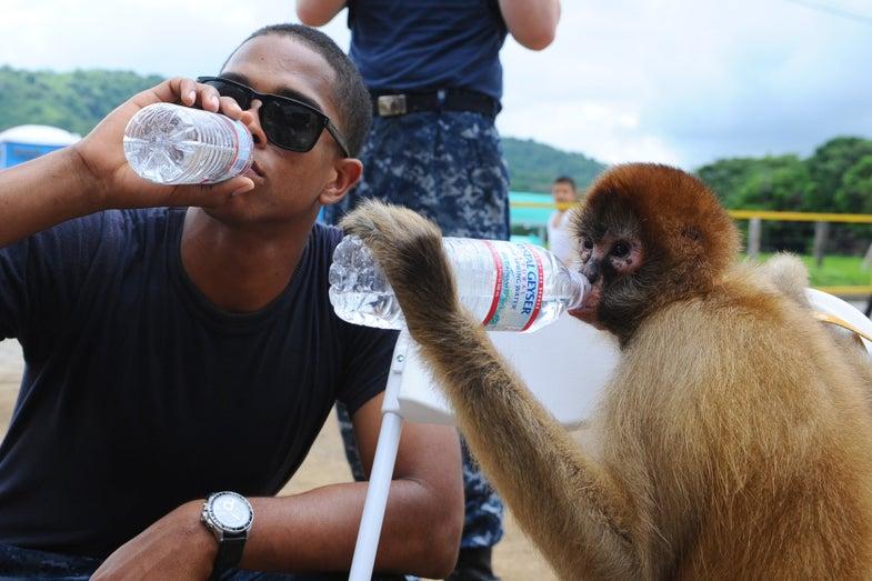Monkeys Understand Basic Forms Of Wealth