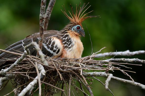 Scientists Rank World's Most 'Evolutionarily Distinct' Birds