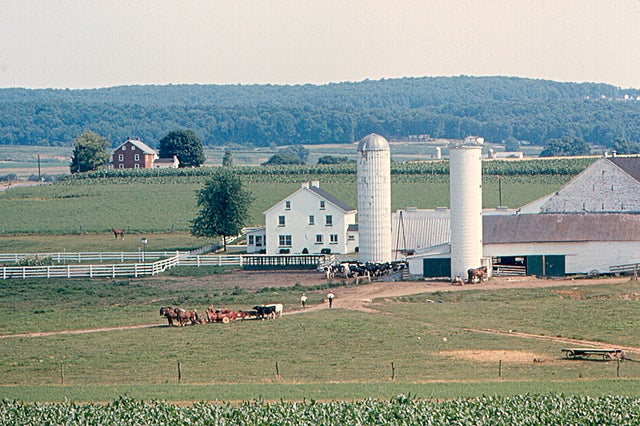 An Amish Environment Protects Against Asthma, New Research Shows