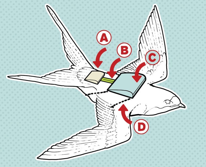 A Bird Backpack That Can Track Migrations