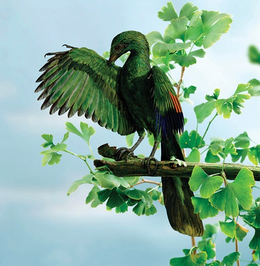 FYI: Did Prehistoric Birds Evolve Flight By Falling Out of Trees?