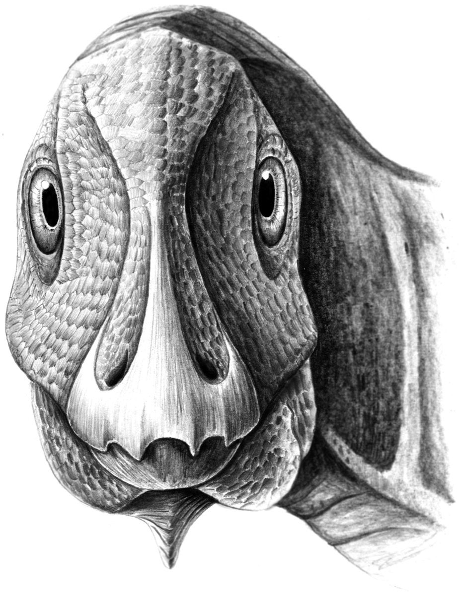 Hadrosaur, Duck-Billed Dinosaur, with a tumor