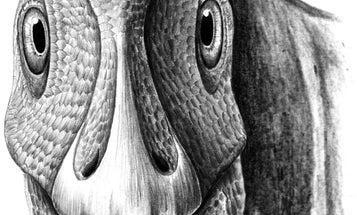 Duck-Billed Dinosaur May Have Had Benign Tumor