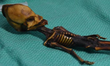 DNA proved this tiny skeleton wasn't an alien—and opened up an ethical debate about testing human remains