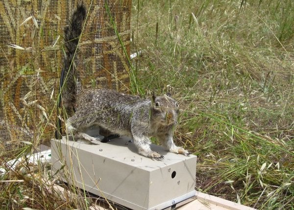 Video: Robot Squirrel Confuses a Snake