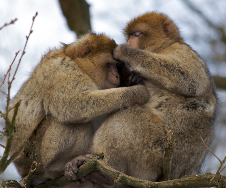 Finding Friends In Primate Places