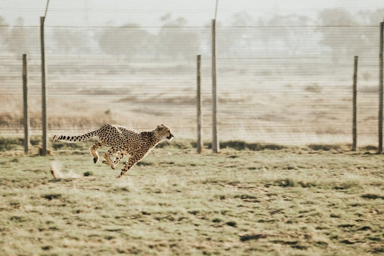WATCH: How far can these animals and objects move in 10 seconds?