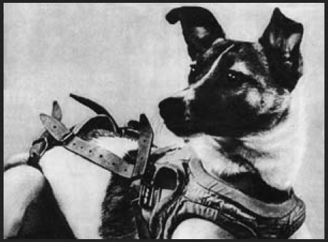 60 years ago today, a Soviet street dog became the first animal to orbit Earth