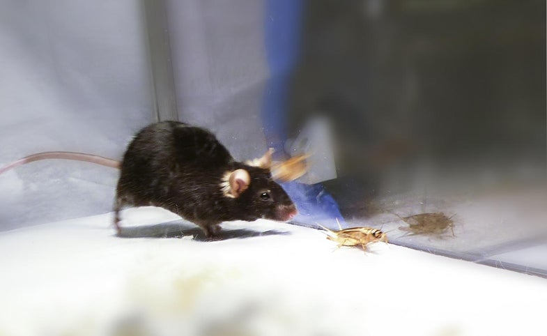 No, scientists didn't turn mice into killer zombies