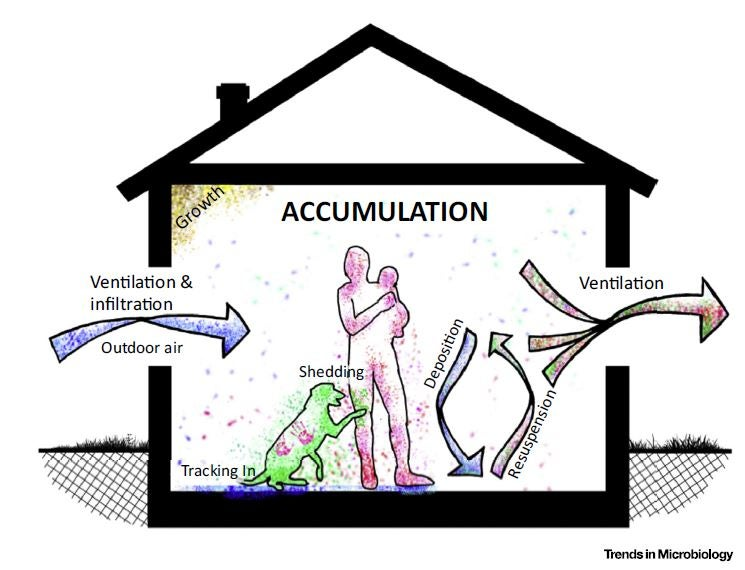 the sources and physical processes that govern assembly of indoor microbial communities.