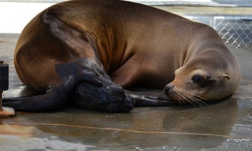 Meet The Newest Addition To The National Zoo: A Baby Sea Lion