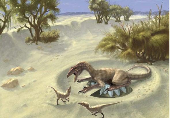 Theropod nest