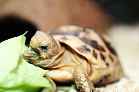 Missing Tortoise, Reclaimed Fungi