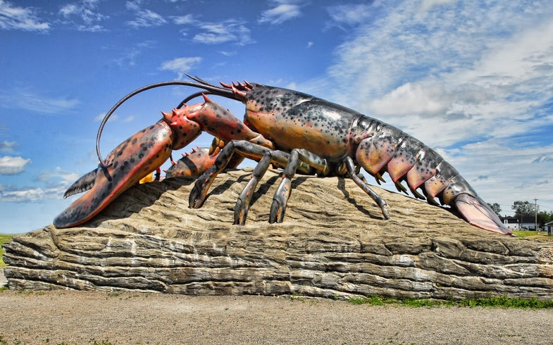 No one knows if lobsters feel pain, which makes boiling them alive rather complicated