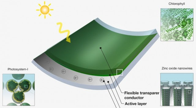 Paint Your Roof With Working Solar Cells Made from Grass Clippings