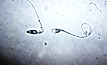 How Sperm Fit Big Things in Small Places