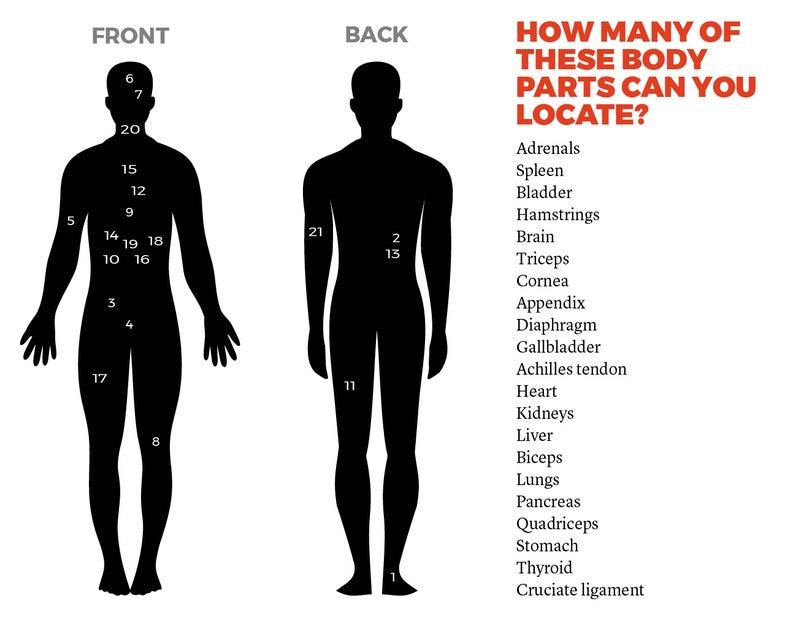 human body quiz