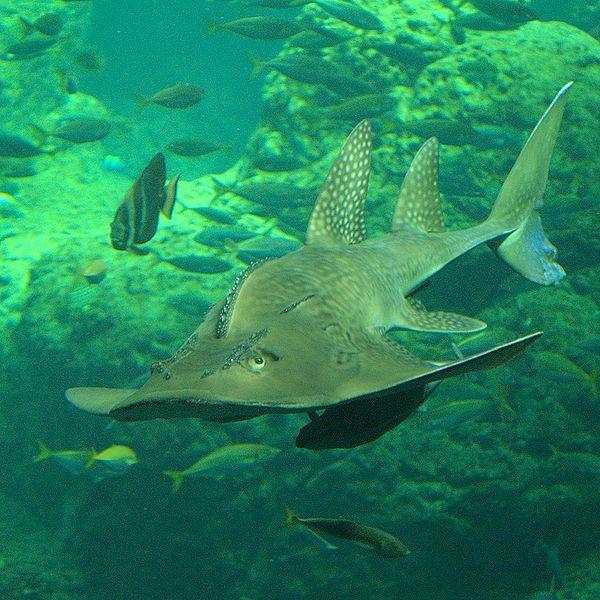 The 10 Weirdest-Named Shark Species
