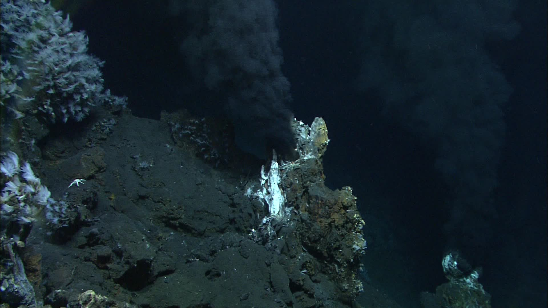 Deep-Sea Dwellers Make A Natural Antibiotic