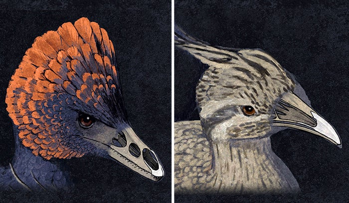Scientists Have Created Chickens With Dinosaur Snouts