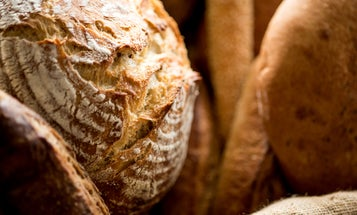 How to make a sourdough starter—and keep it alive