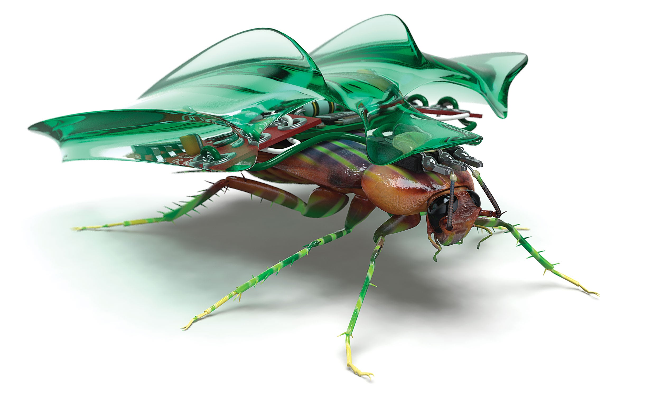 How To Build Your Own Cockroach Cyborg