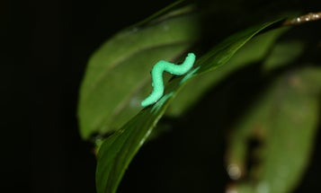 These scientists made 2,879 tiny clay caterpillars and hid them all over the world