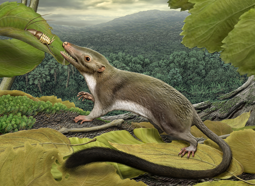 Scientists Reconstruct Scampering Common Ancestor Of All Us Placental Mammals
