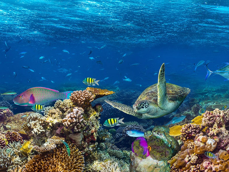 Coral reef ecosystem.