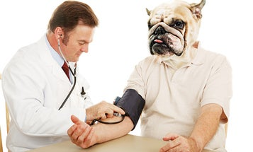 Can Physicians Who Work on Humans Treat Animals Too?