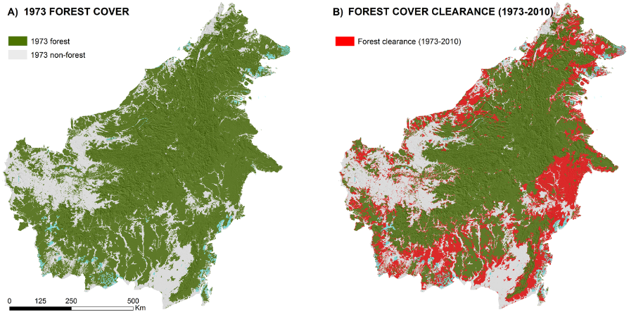 One-Third Of Borneo's Rainforest Has Been Cut Down