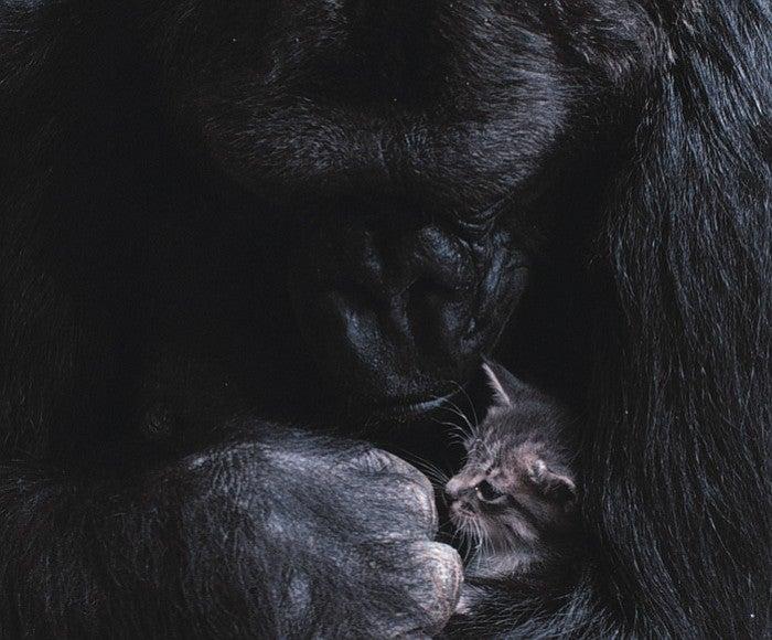 Koko and a kitten