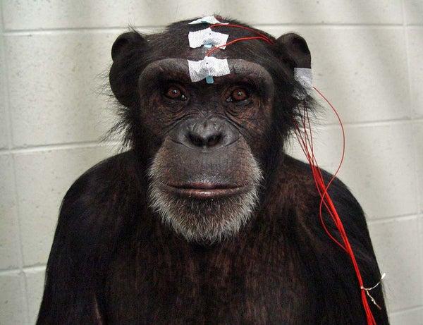 Monkey Mind Meld Moves Avatar Arm