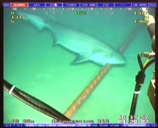 Google Protects Its Undersea Fiber Optic Cables… From Sharks