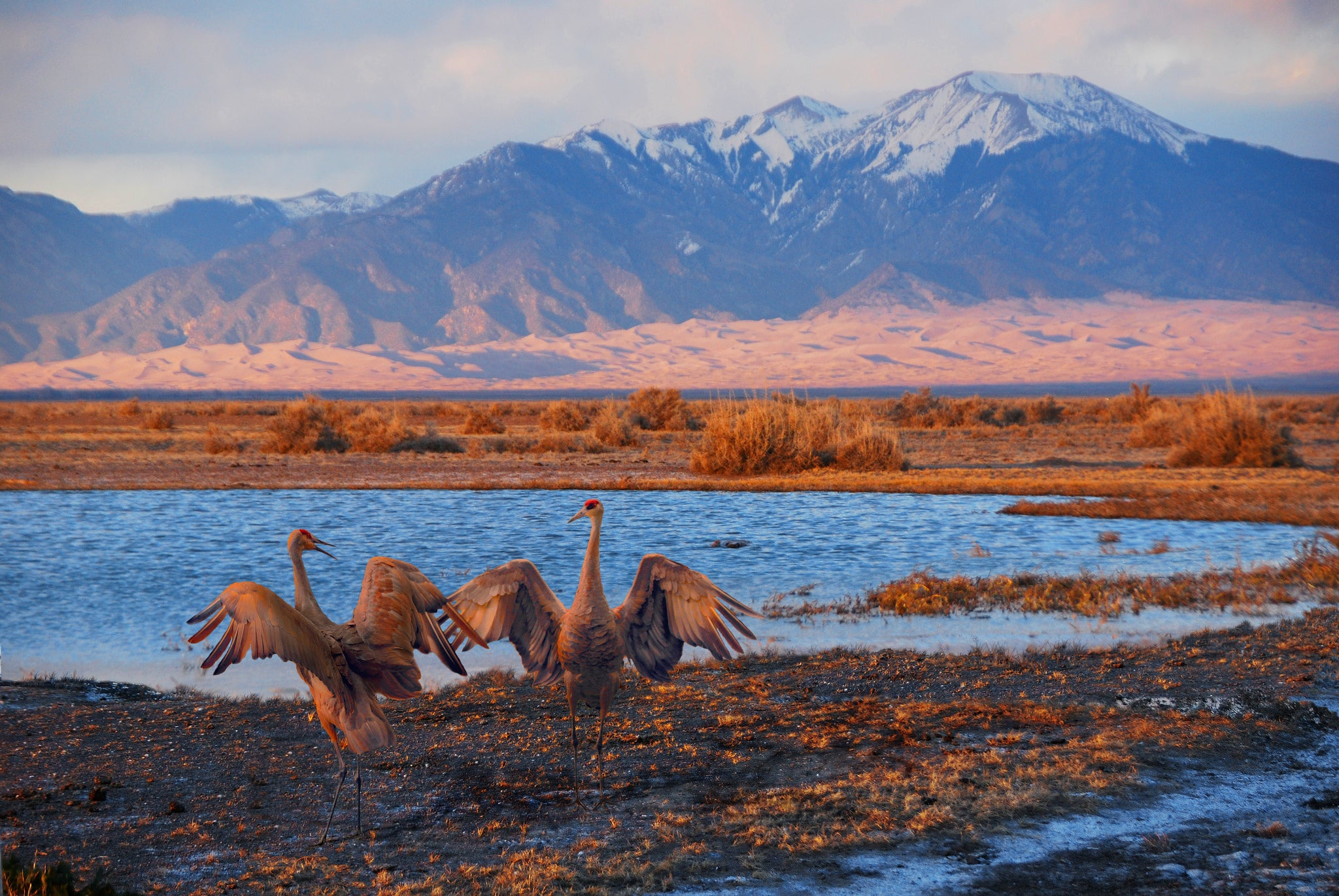 Our seasons are out of whack, which is really bad for migratory birds
